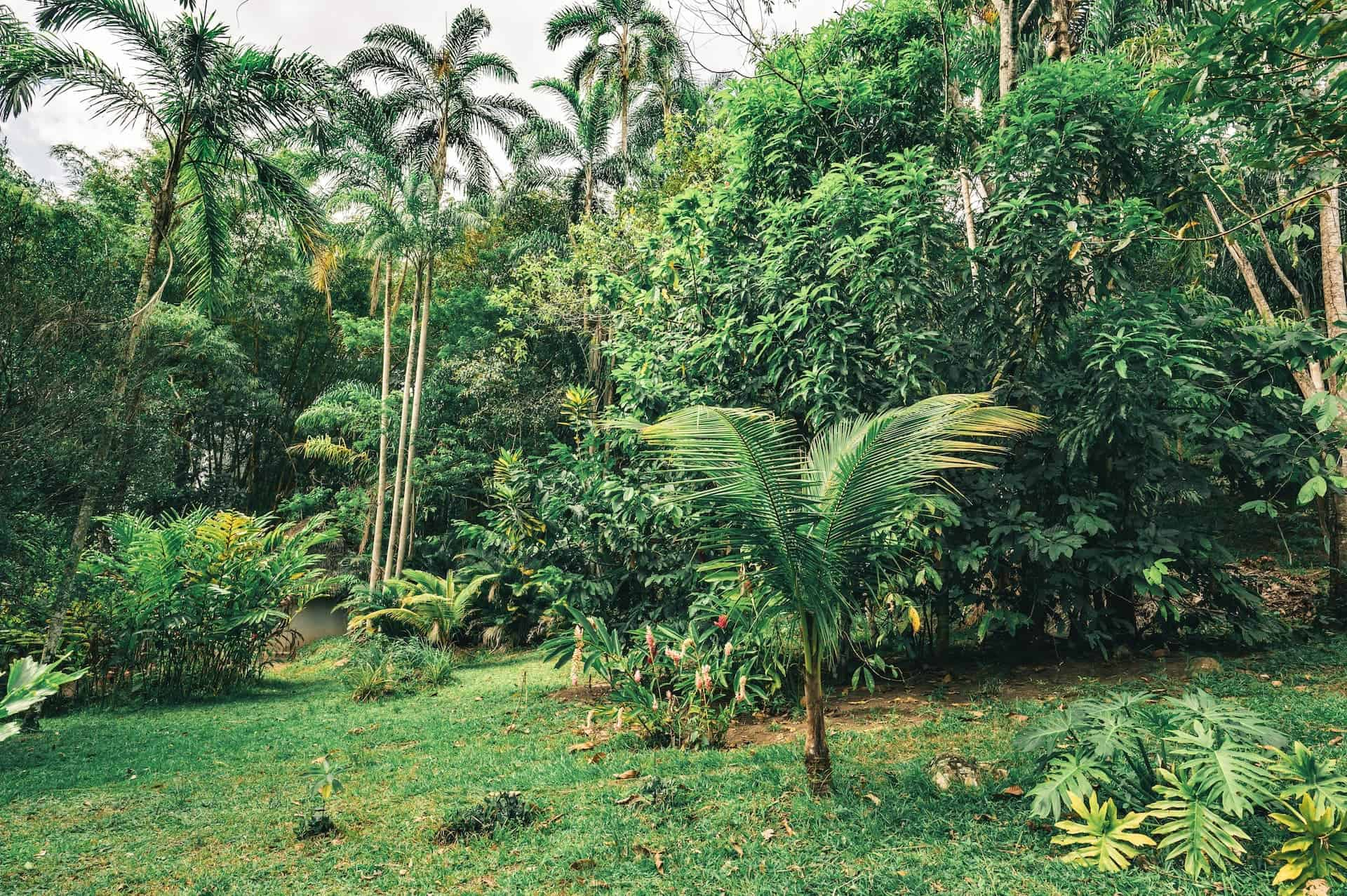 What is Regenerative Agroforestry?