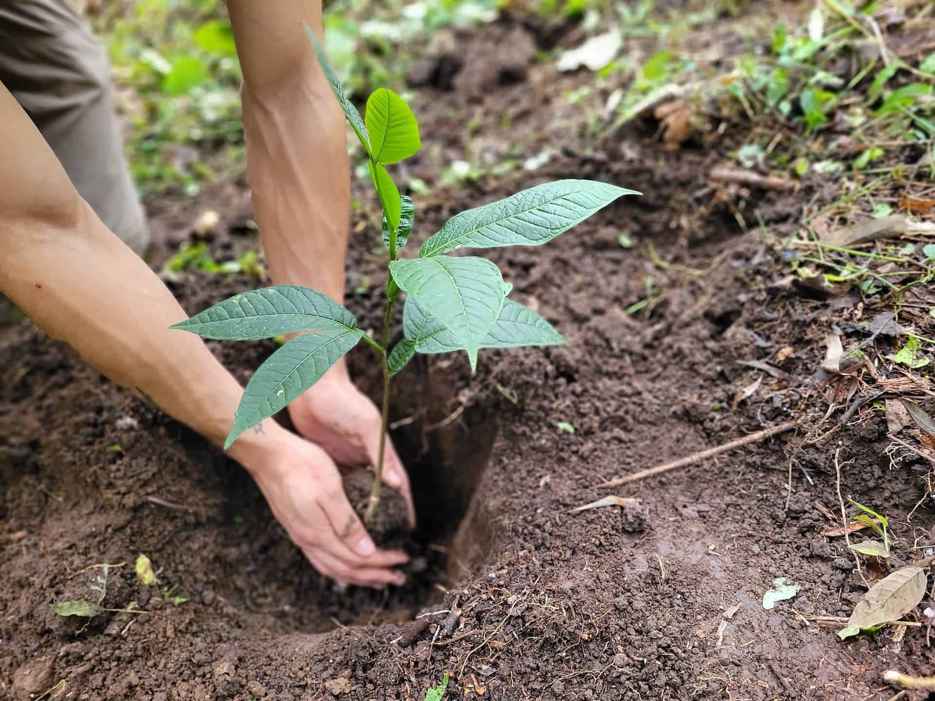 How Much It Costs to Plant a Tree in the Tropics