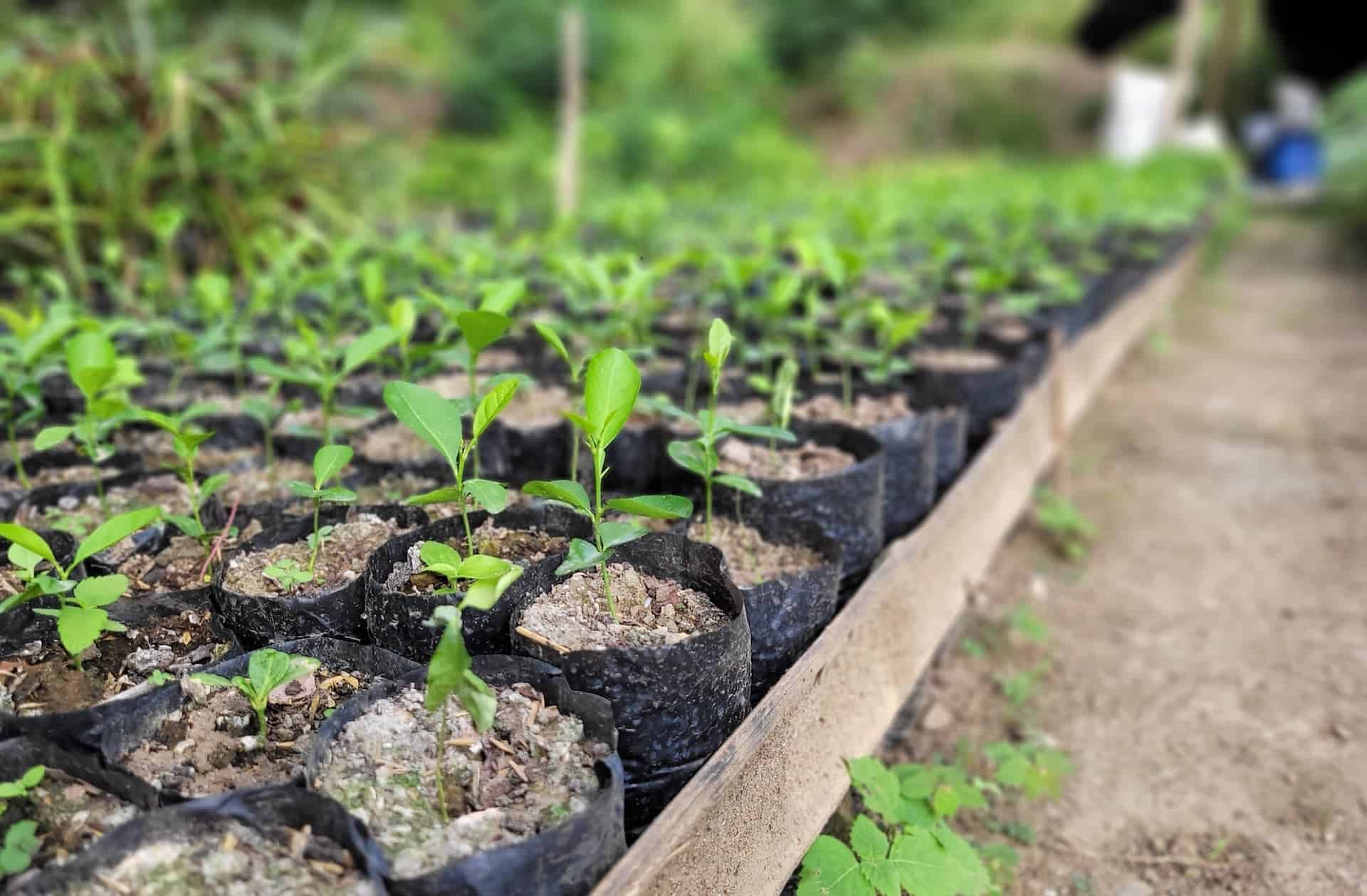 Cost Structure of TMA's Community Reforestation Program