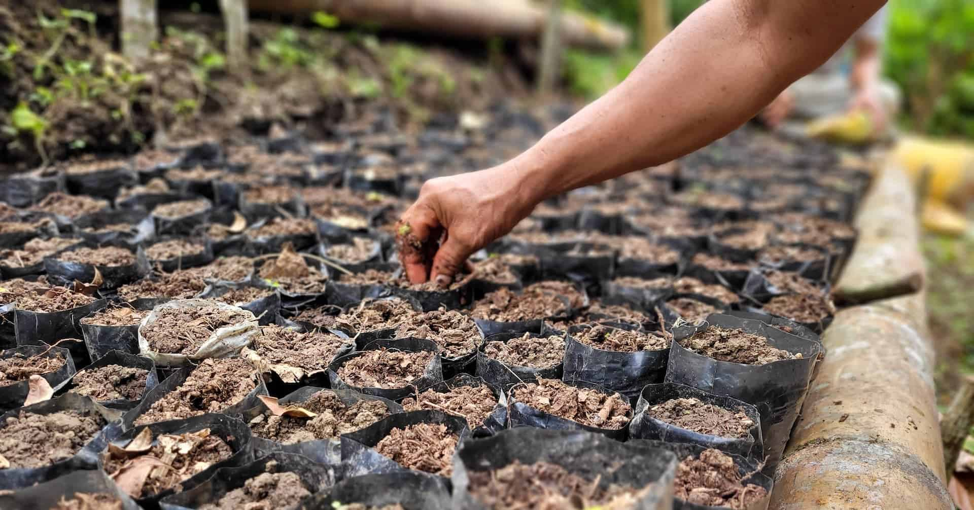 Why Paying Farmers for Reforestation is a Game-Changer