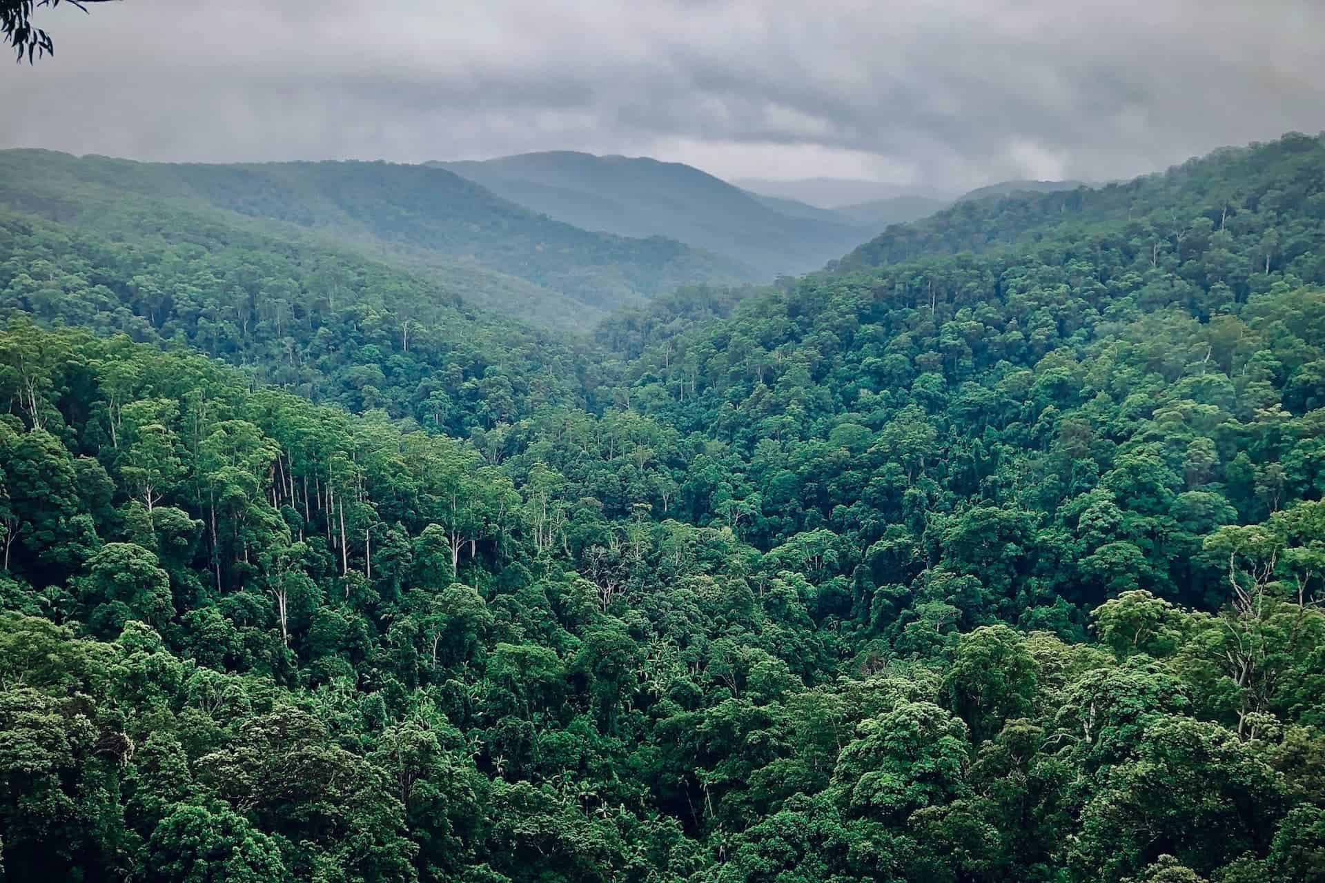 The Danger of Cheap Carbon Offsets
