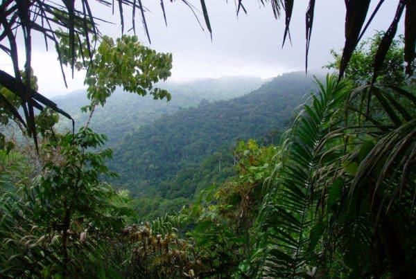 Pacific Rainforest of Ecuador - Jama-Coaque Reserve