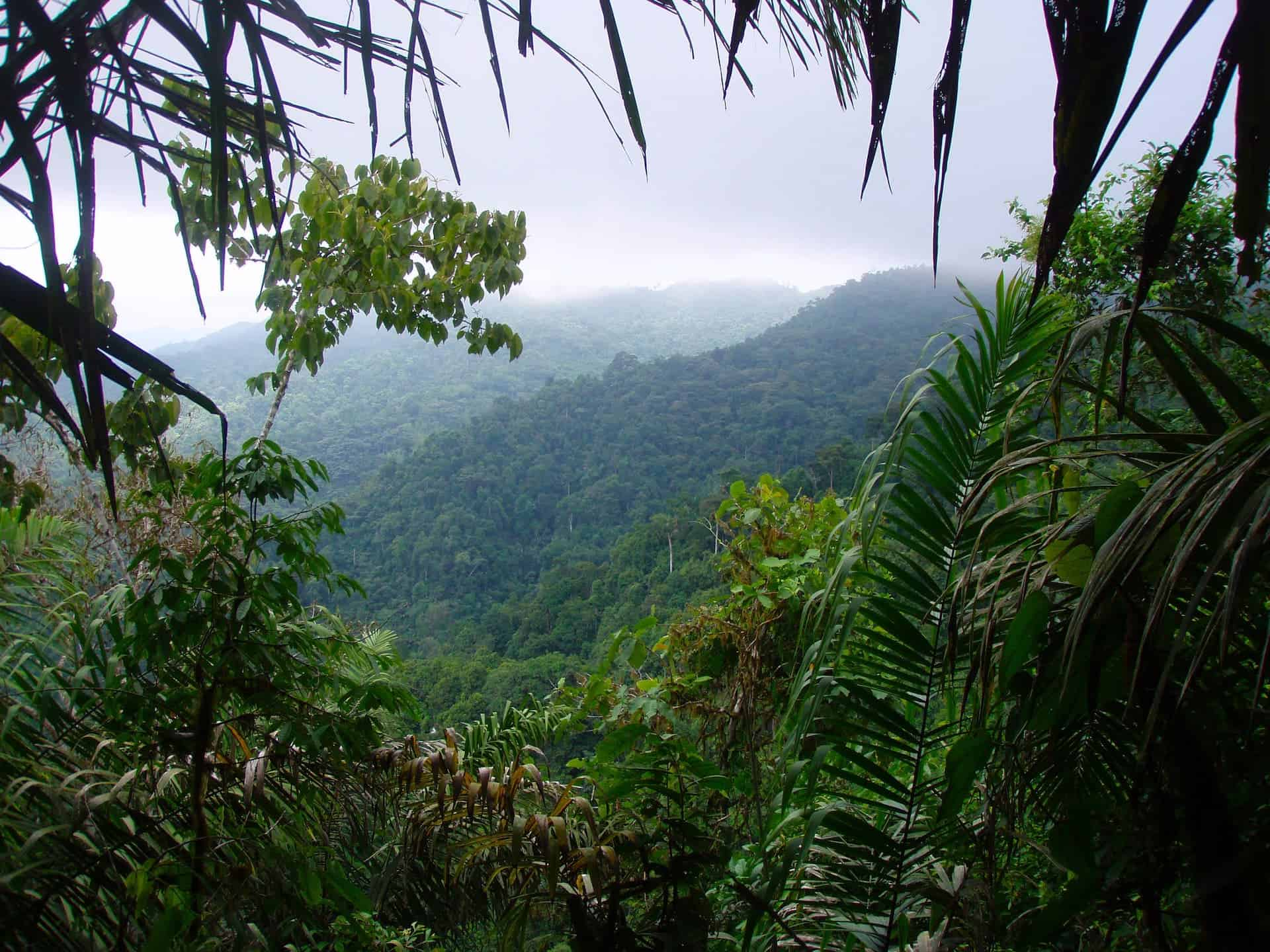 The Most Endangered Rainforest You've Never Heard Of